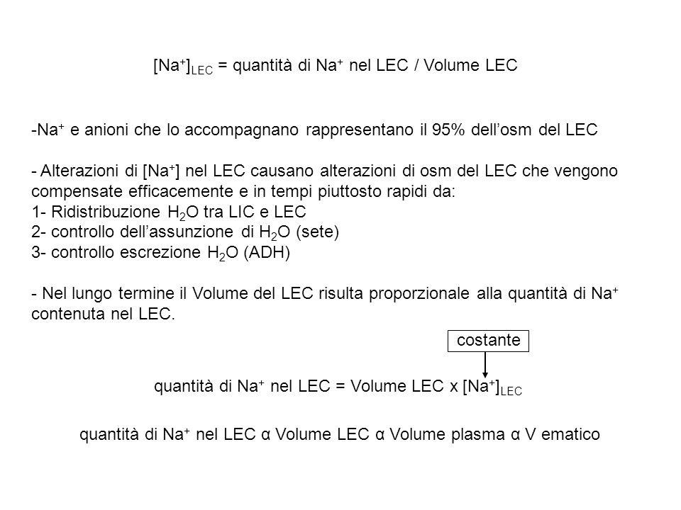 [Na+]LEC = quantità di Na+ nel LEC / Volume LEC